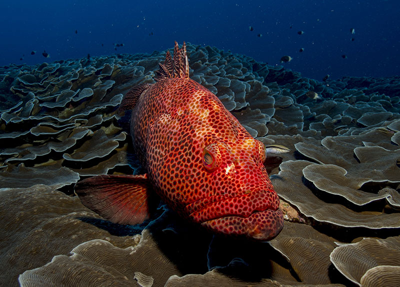 Best diving sites in Mozambique