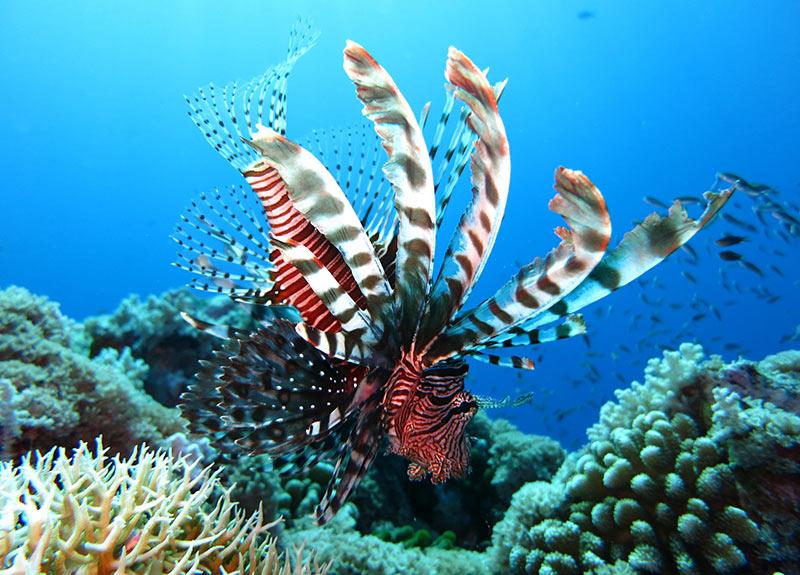 Maldives lionfish scuba destinations