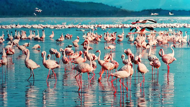 Flamingo tours Safaris