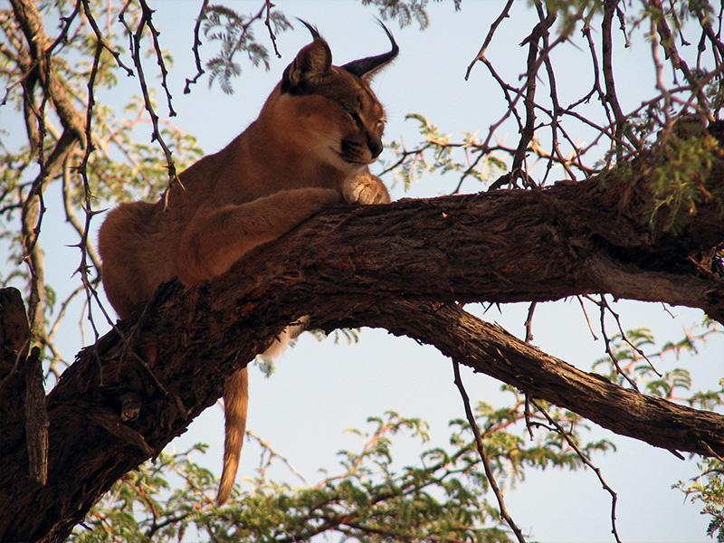 Wildlife Sanctuary Namibia