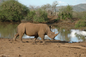 Kruger National Park Self-drive or Guided Tours