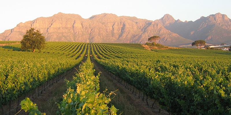South Africa Stellenbosch Winelands Tour