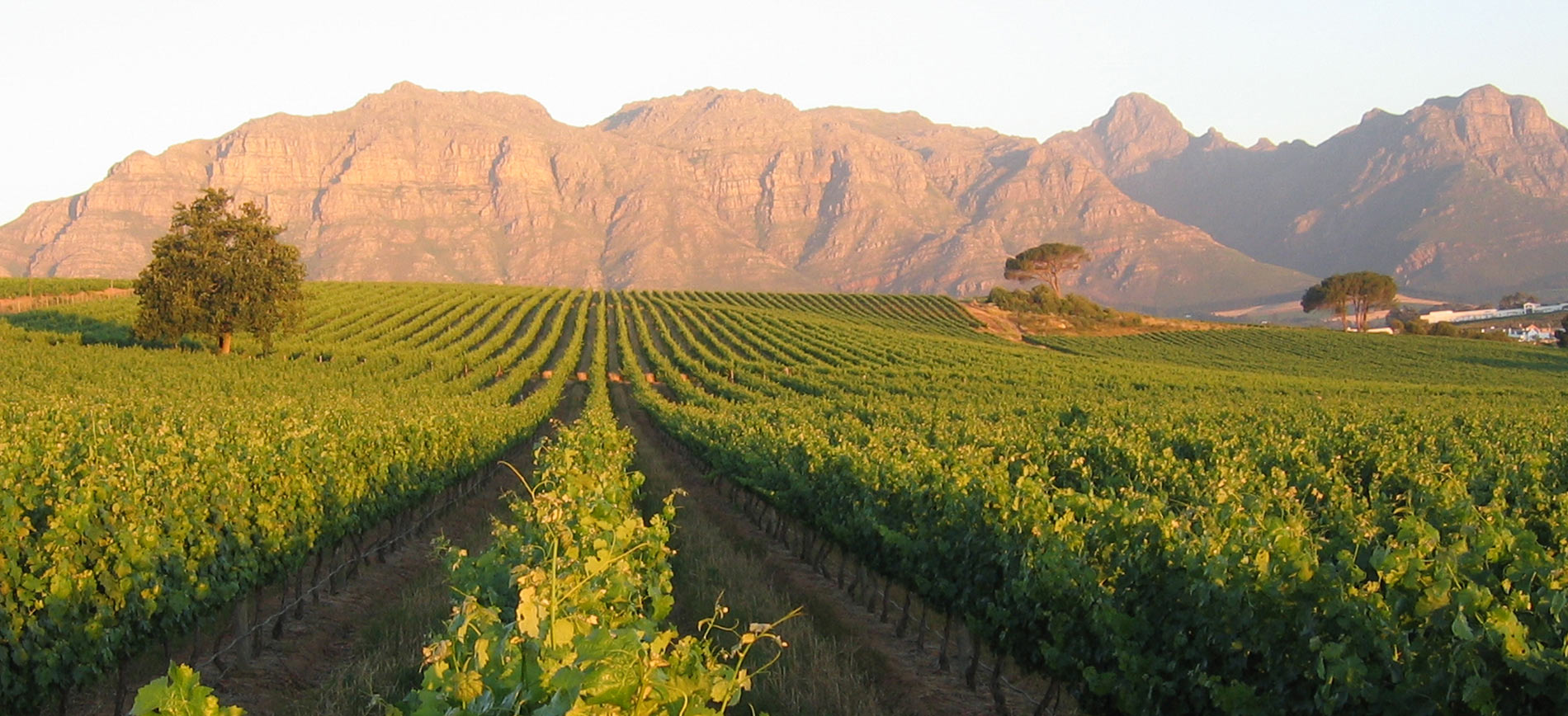 South Africa Stellenbosch Winelands Tours